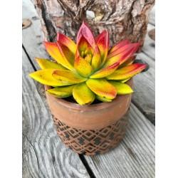 Succulente avec son cache-pot