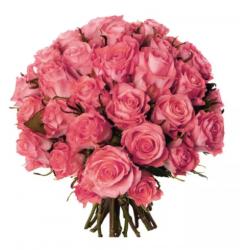 Rose rose à l'unité