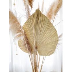 Feuille de palmier séchée